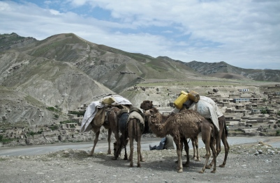 Little camel caravan in the Kotcha River valley