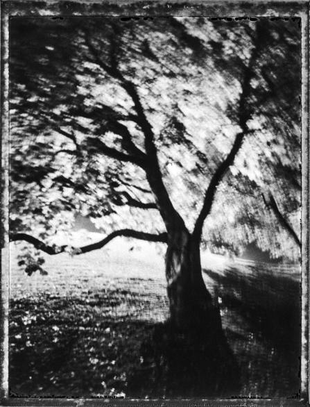 nidaros2